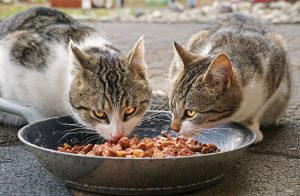how to feed your dog and cat wet food