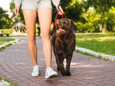 Your senior dog may need a tailored made exercise routine
