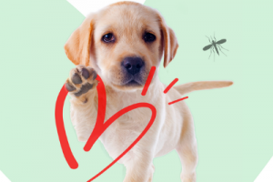 Heartworm and Dogs