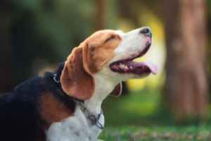 How to protect your pet from a heatstroke